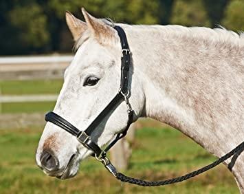 Busse Reitsport Lederhalfter Horse II