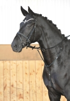 Busse Reitsport Martingal CRYSTAL