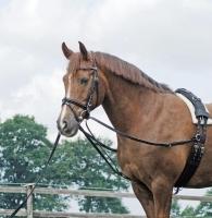 Busse Reitsport Dreieckszügel BASIC (Pony)